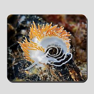 Nudibranch laying eggs Mousepad