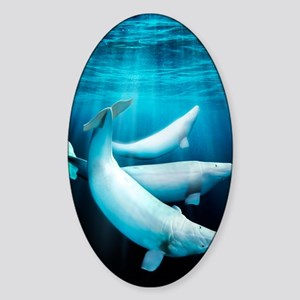 Beluga whales, artwork Sticker (Oval)