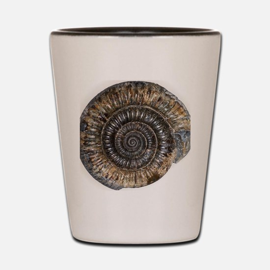 Ammonite fossil Shot Glass