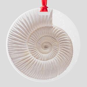 Ammonite Round Ornament