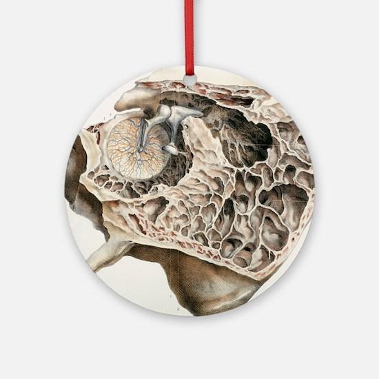 Middle ear anatomy, 1844 artwork Round Ornament