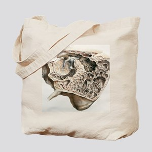 Middle ear anatomy, 1844 artwork Tote Bag