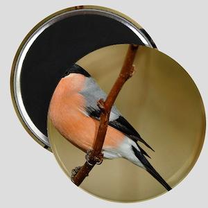 Male Bullfinch Magnet