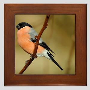 Male Bullfinch Framed Tile