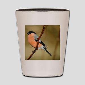Male Bullfinch Shot Glass