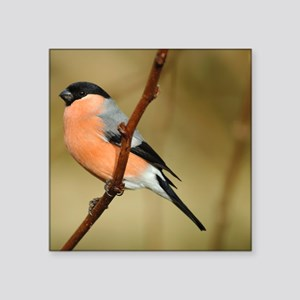 "Male Bullfinch Square Sticker 3"" x 3"""