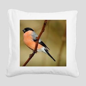 Male Bullfinch Square Canvas Pillow