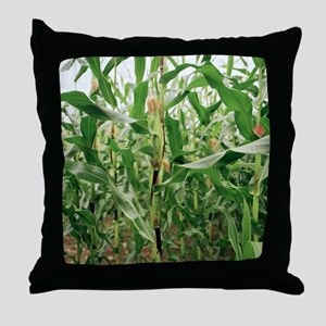 Maize crop Throw Pillow