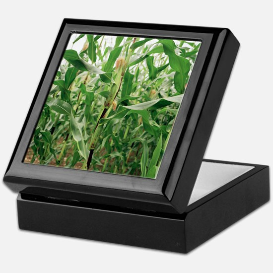 Maize crop Keepsake Box