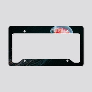 Lion's mane jellyfish License Plate Holder