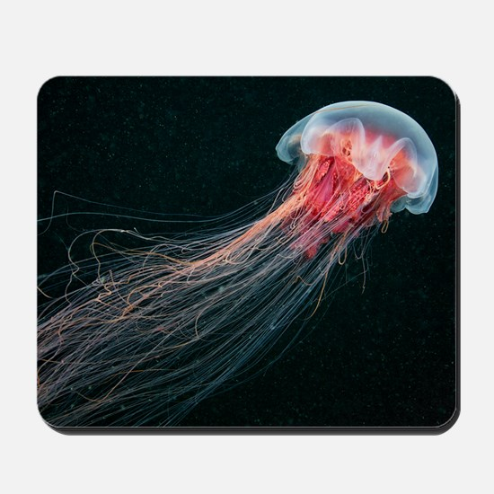 Lion's mane jellyfish Mousepad