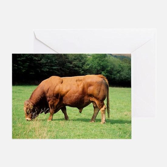 Limousin bull Greeting Card