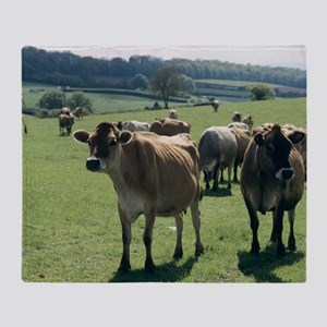 Jersey cows Throw Blanket