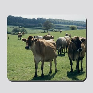 Jersey cows Mousepad