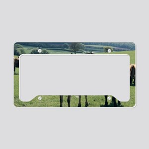 Jersey cows License Plate Holder