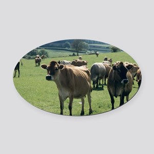 Jersey cows Oval Car Magnet