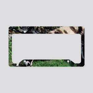 Jacob sheep License Plate Holder
