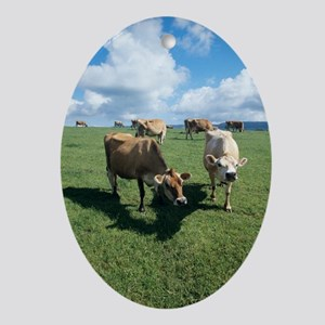 Jersey cows Oval Ornament
