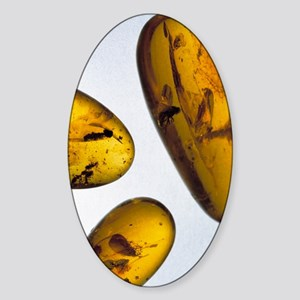 Insects in amber Sticker (Oval)