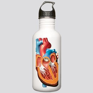 Human heart anatomy, a Stainless Water Bottle 1.0L