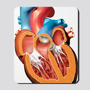 Human heart anatomy, artwork Mousepad