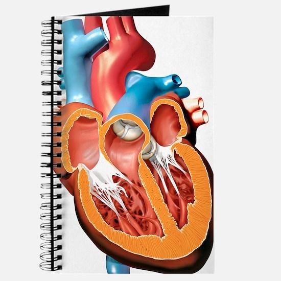 Human heart anatomy, artwork Journal