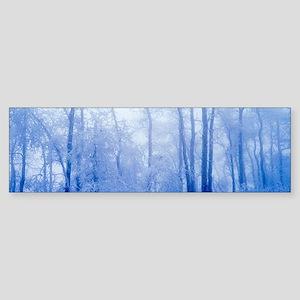 Hoar frost in woodland Sticker (Bumper)