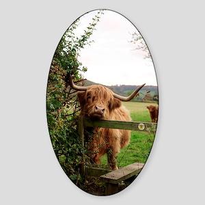 Highland cow Sticker (Oval)
