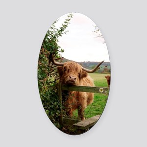 Highland cow Oval Car Magnet
