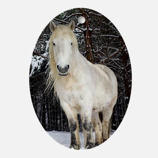 Highland pony Oval Ornament