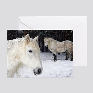 Highland ponies Greeting Card
