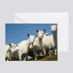Herd of goats Greeting Card