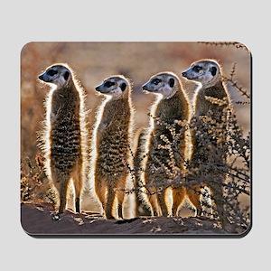 Meerkats Mousepad