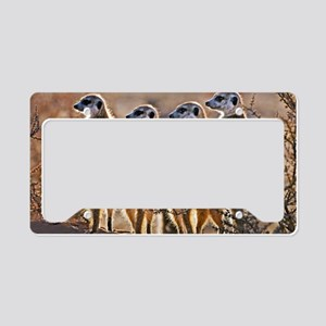 Meerkats License Plate Holder
