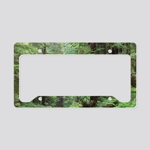 Hemlocks and redwoods in a No License Plate Holder