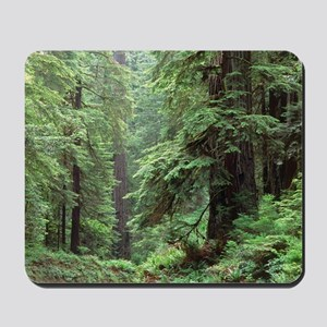 Hemlocks and redwoods in a North America Mousepad