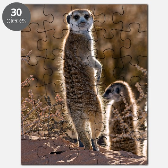 Meerkat Puzzle