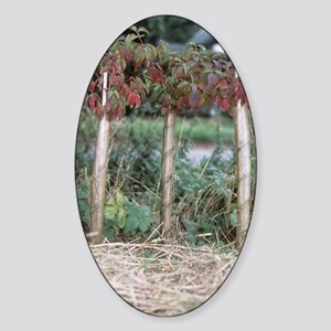 Hedgerow planting Sticker (Oval)