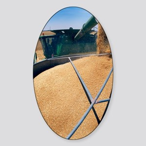 Harvesting grain Sticker (Oval)