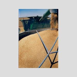 Harvesting grain Rectangle Magnet