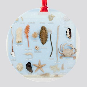 Marine life specimens Round Ornament