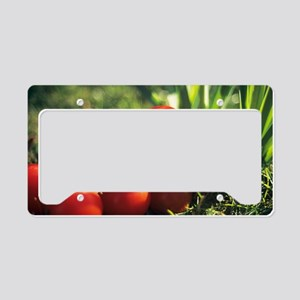 Harvested vine tomatoes License Plate Holder