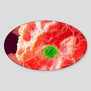 Macrophage engulfing pathogen, artw Sticker (Oval)