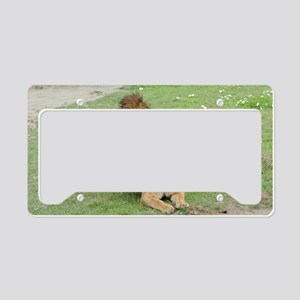 Lion and lioness mating License Plate Holder