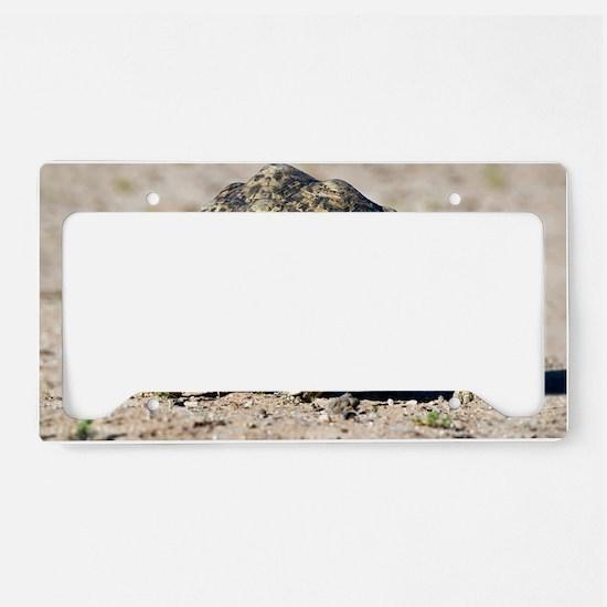 Leopard tortoise License Plate Holder