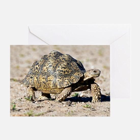 Leopard tortoise Greeting Card