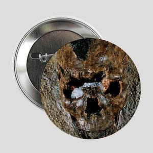 "Fossilised skull of a Homo erectus bo 2.25"" Button"