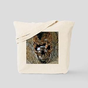 Fossilised skull of a Homo erectus boy fr Tote Bag