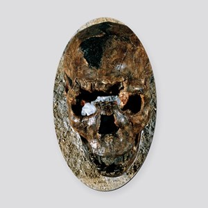 Fossilised skull of a Homo erectus Oval Car Magnet