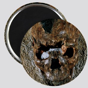 Fossilised skull of a Homo erectus boy from Magnet